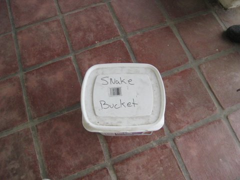 That's right, a Snake Bucket!   Photo by mjb2009