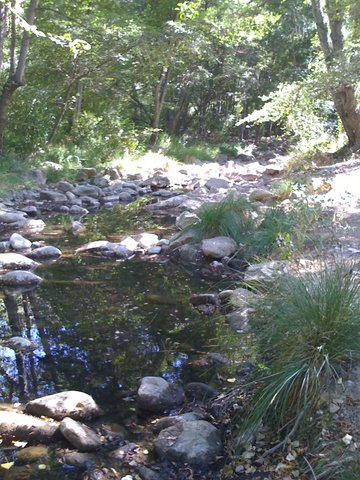 Creekside at Middle Lion Campground!  Photo by mjb2009