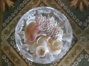 A Bahaman Shell-Filled Bowl of Spring! Photo by mjb2010