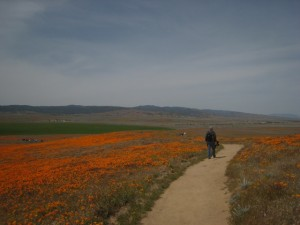 Mr.JB Heads Up the Trail to Track Poppies! Photo by mjb2010