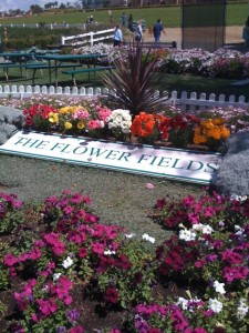 BFF: Best Flower Fields! Photo by mjb2011
