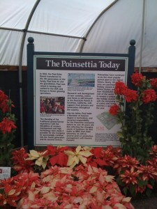 Poinsettias Get Their Own Venue! Photo by mjb2011