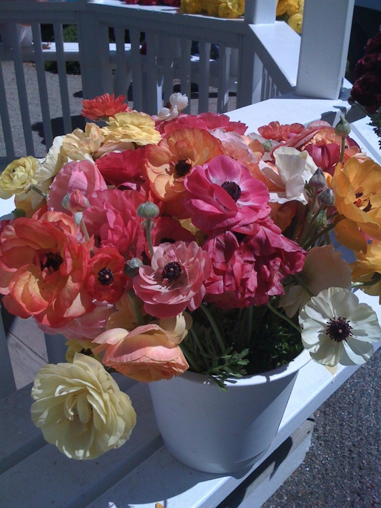A Virtual Bouquet for All the Moms! Photo by mjb2011