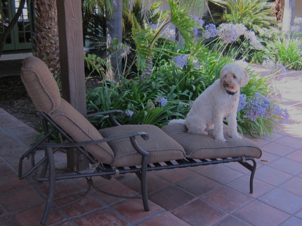 missjunebug's fav chaise and her fav companion, Spoonbug! Photo by mjb2011