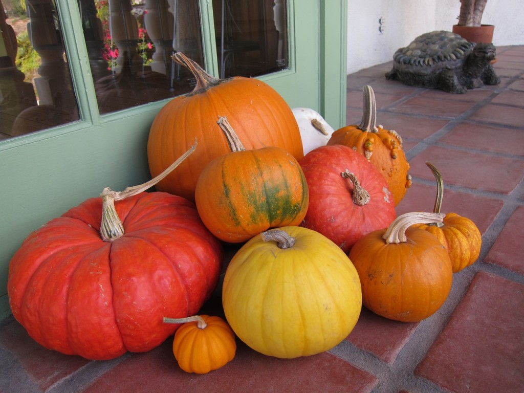 Simple pumpkins not so simple any more: Red, orange greenish, white and warty! Photo by mjb2011