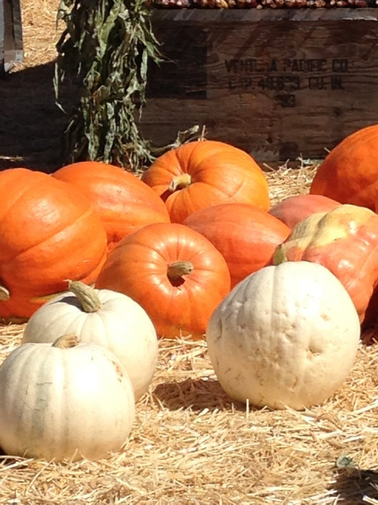 Ghost pumpkins! So spooky the orange ones cower! Photo by mjb2013